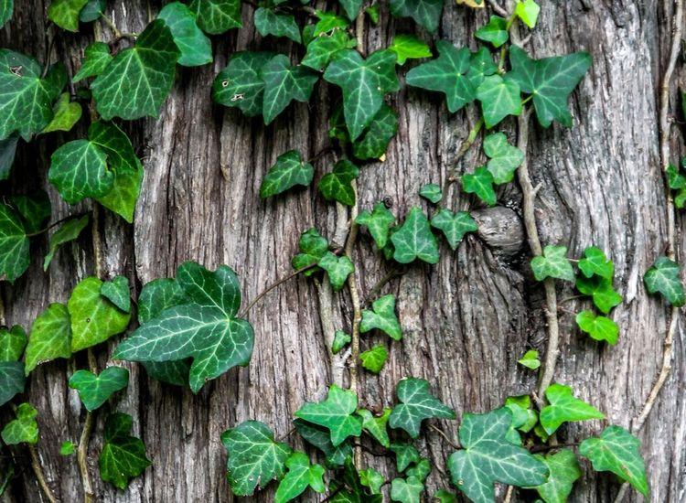 Tree Surgery & Removal